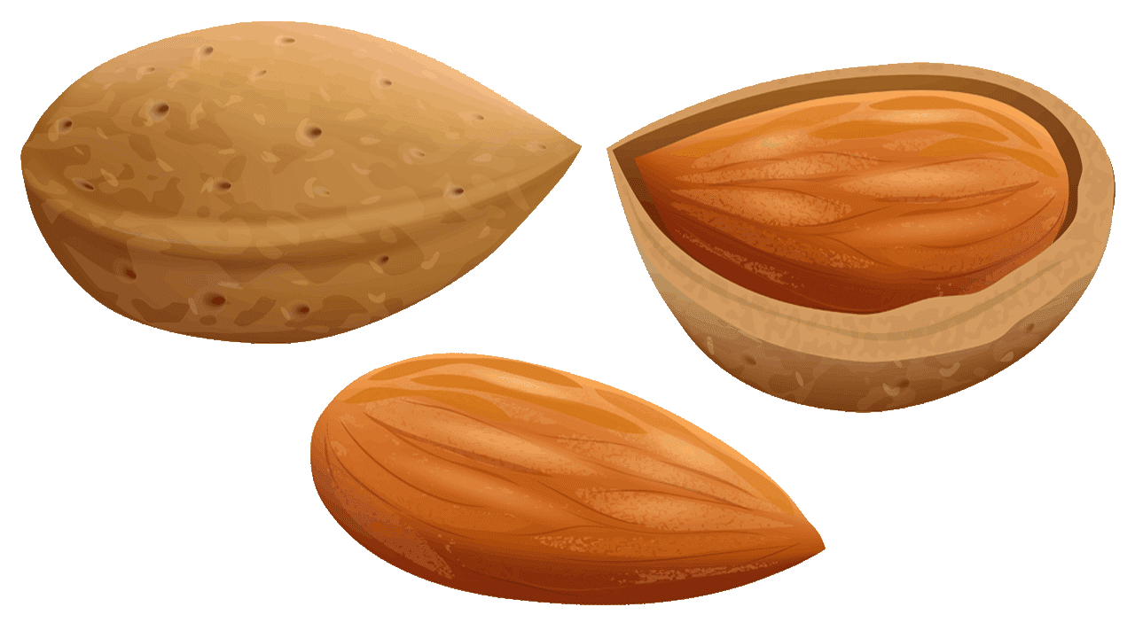 almond clipart download fruit names with pictures #30360