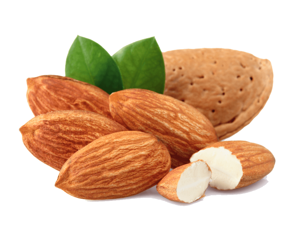 almond group transparent png stickpng #30296
