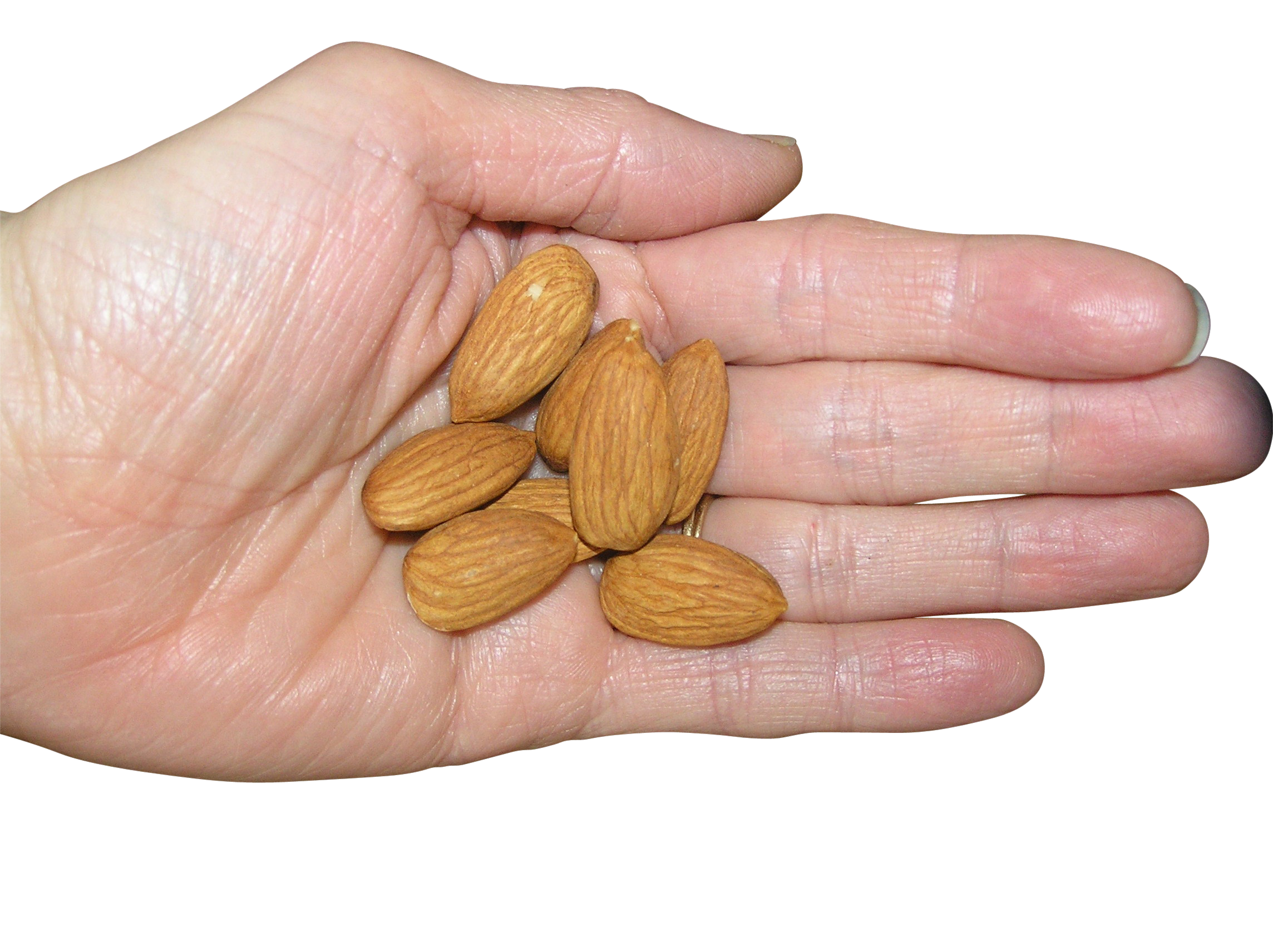 almond hand png image purepng transparent png image library #30344