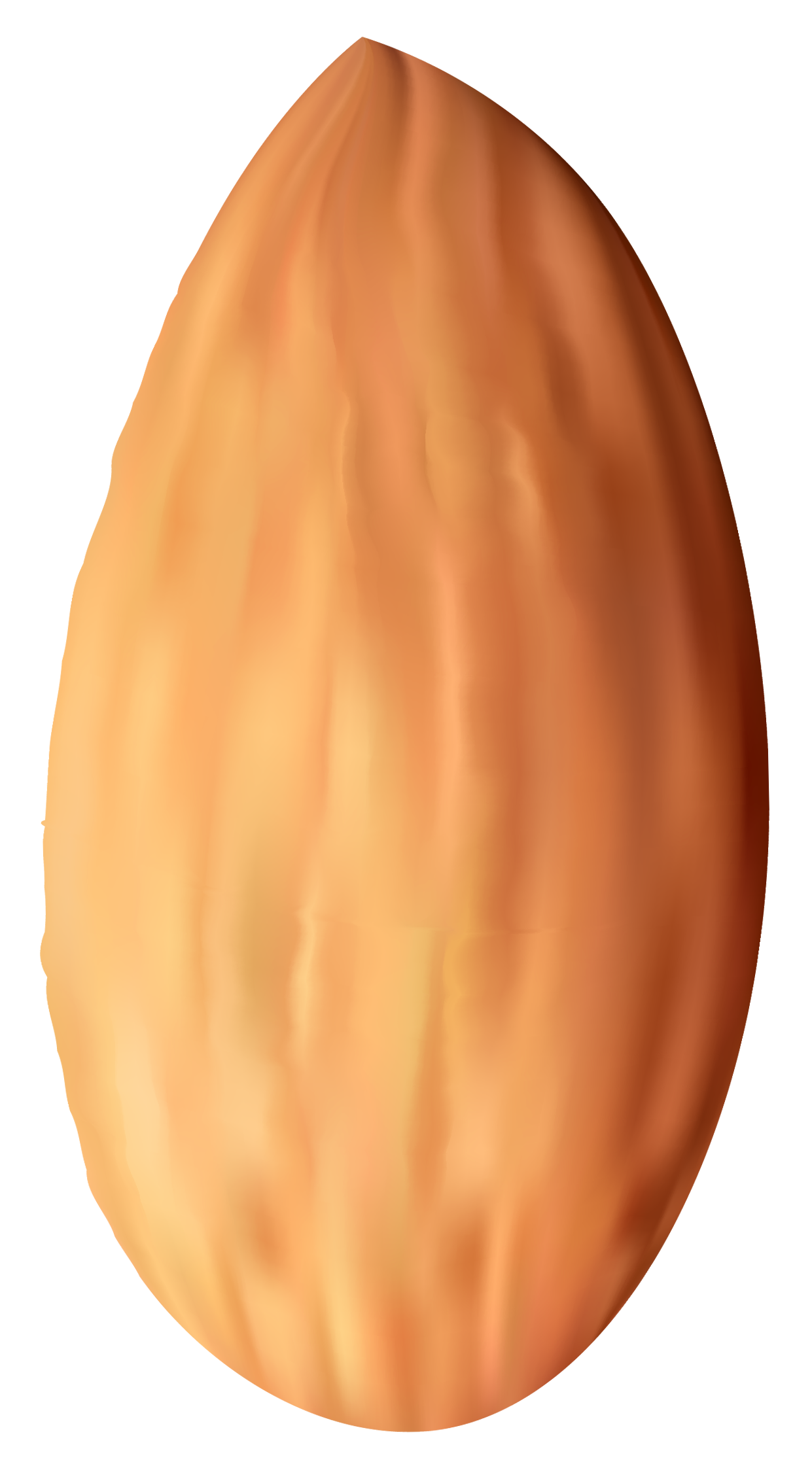 almond nut png clipart best web clipart #30359