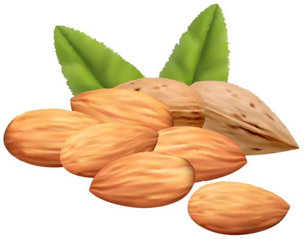 almond nuts png clipart image gallery yopriceville high quality images and transparent png #30335