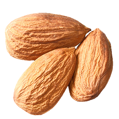 almond png images are available download crazypngm crazy png images download #30328