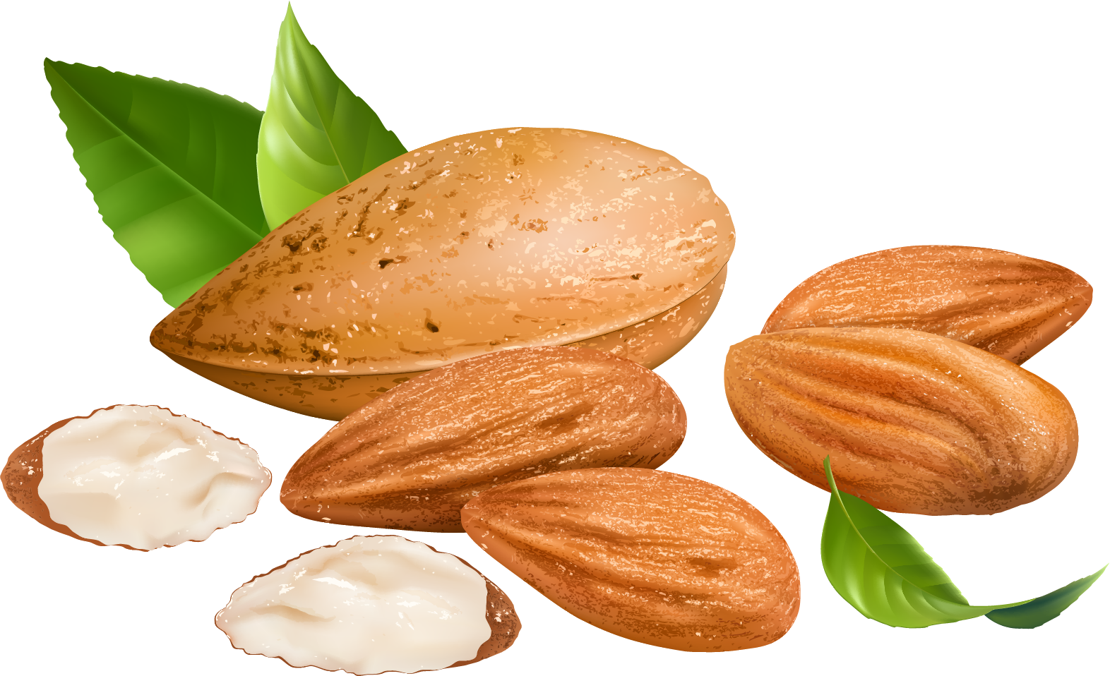 almond png transparent images png only #30287