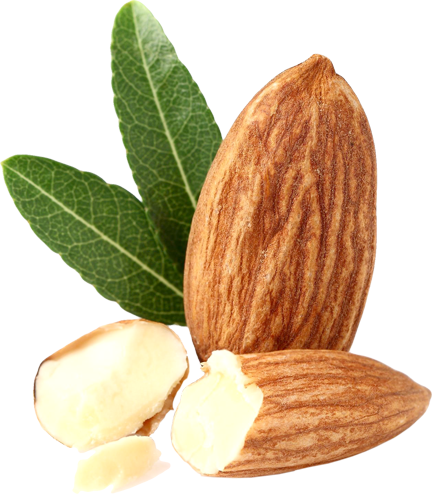 almond png transparent images png only #30307
