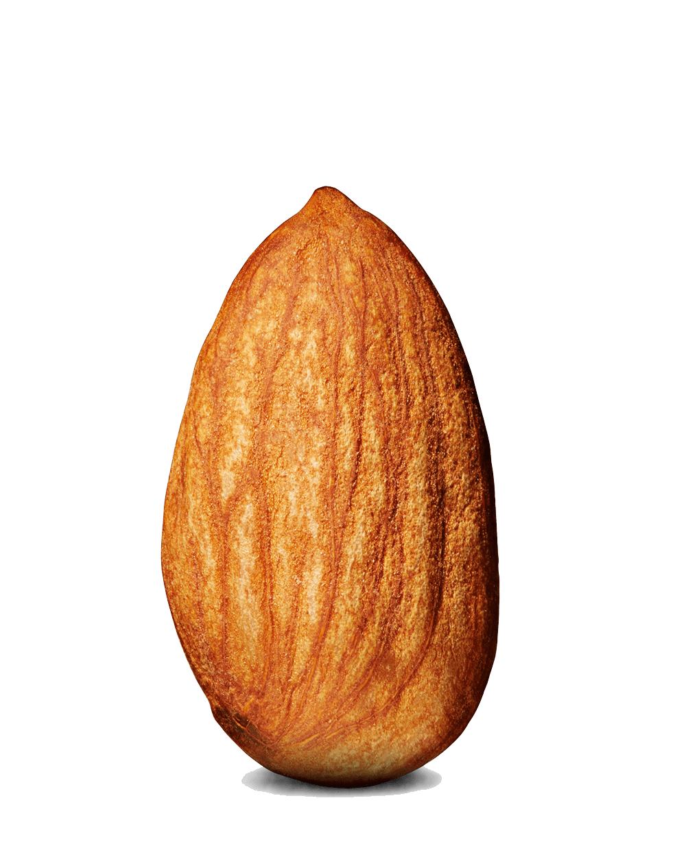 almond single transparent png stickpng #30327