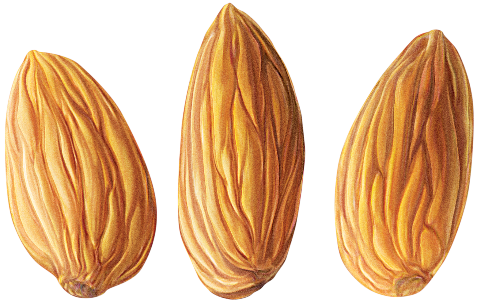 almond transparent png pictures icons and png backgrounds #30347