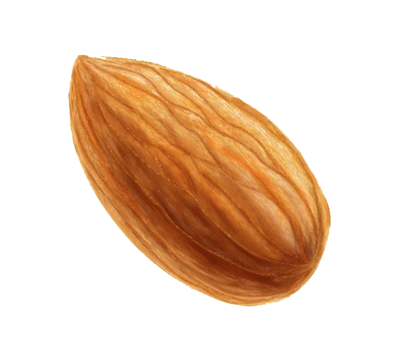nut almond icon cartoon almond png download transparent nut png download #30334