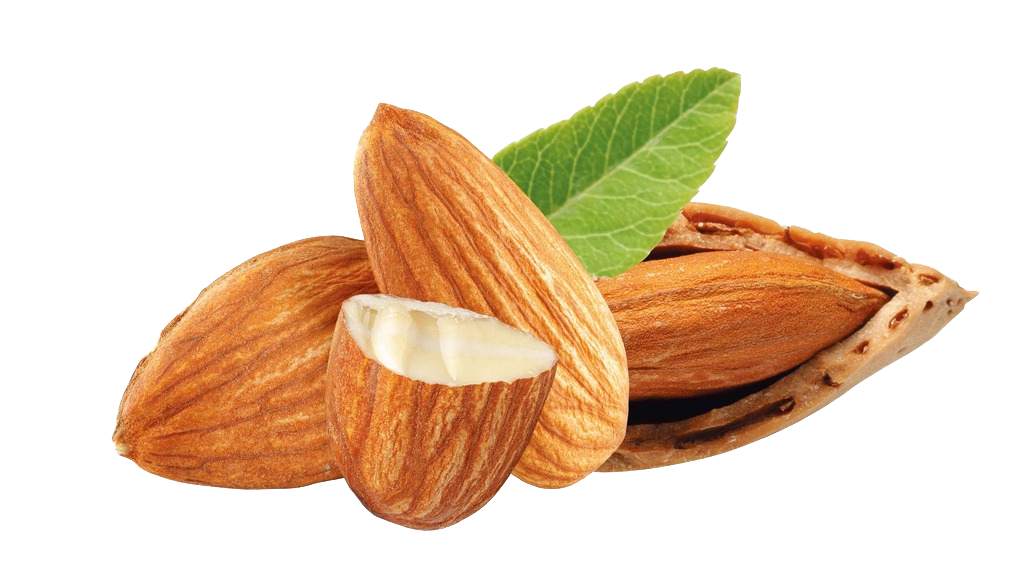 nuts almond dried fruit almond nuts png download transparent nut png #30358