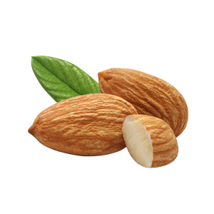 sweet almond oil suppliers sweet almond oil wholesale suppliers bulk price #30312