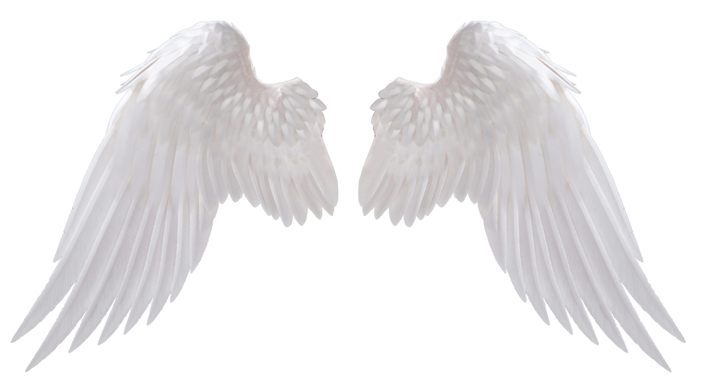 wings feathered angel and bird wings wingit #20564