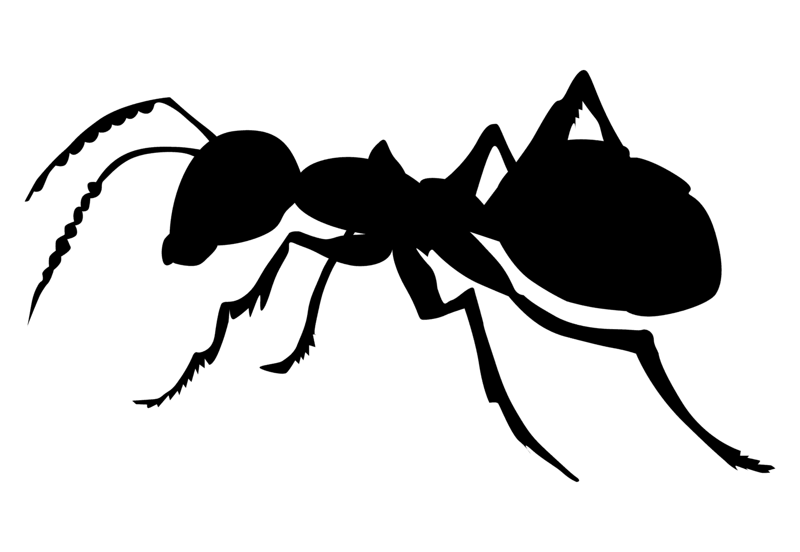 ant, first choice pest management extermination massillon canton and stark county ohio #28870