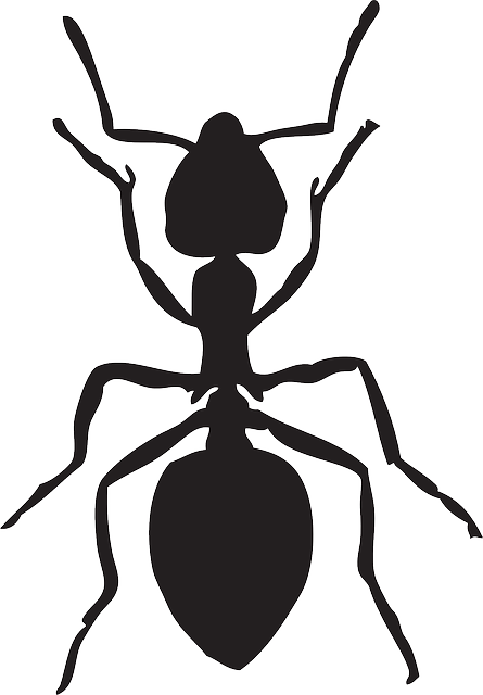 ant insect vector graphic pixabay #28940