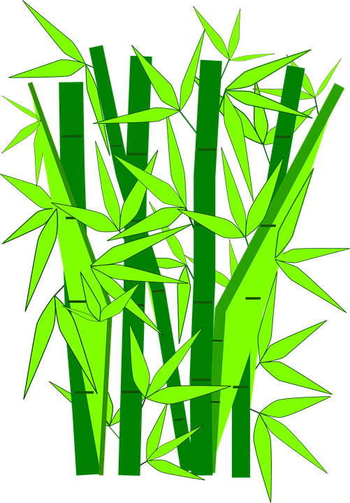 bamboo plants green vector graphic pixabay #18283