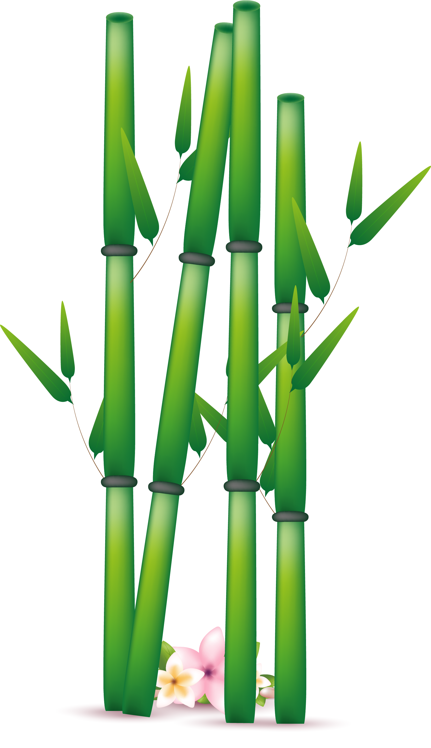 bamboo png transparent images png only #18274