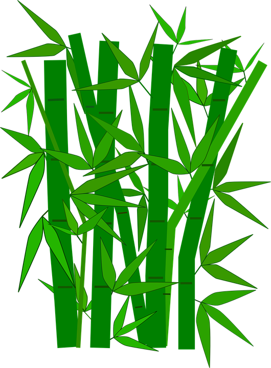bamboo png transparent images png only #18312