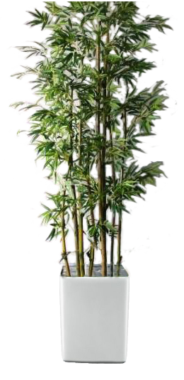 bamboo, rent plant large plants green world builders inc #18322