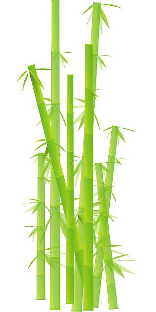 vector graphic bamboo grass jungle leave plant #18280