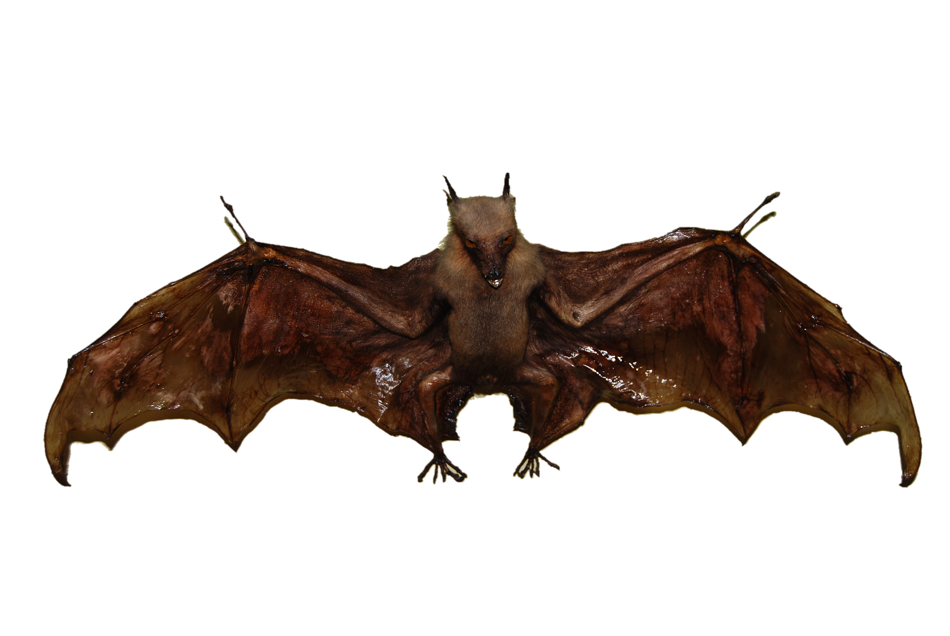 bat removal experts service high satisfaction ratings #20481