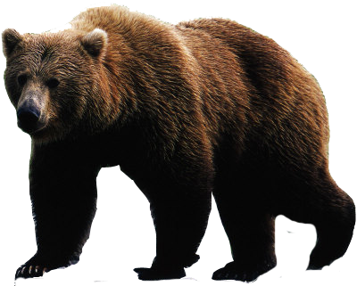 bear png image web icons png #21633