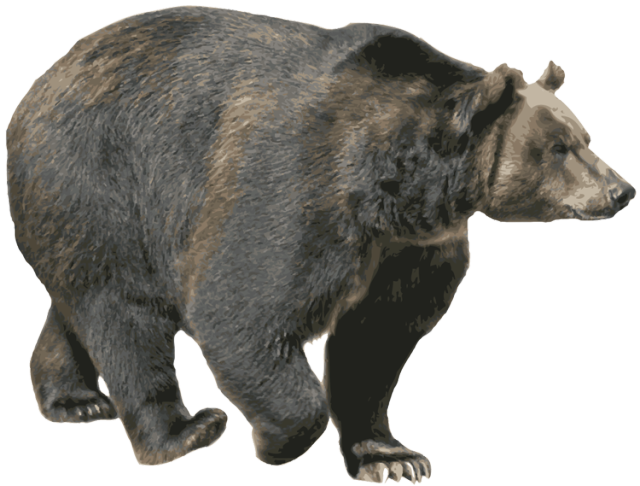 bear png image without background web icons png #21709