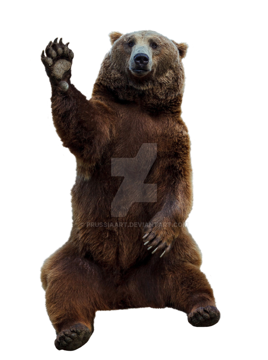 brown bear transparent background prussiaart #21636