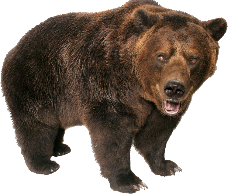 grizzly bear standing png image purepng #21656
