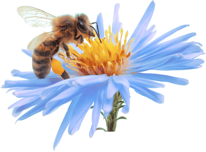bee, get relief enjoy life kern allergy medical center #18979