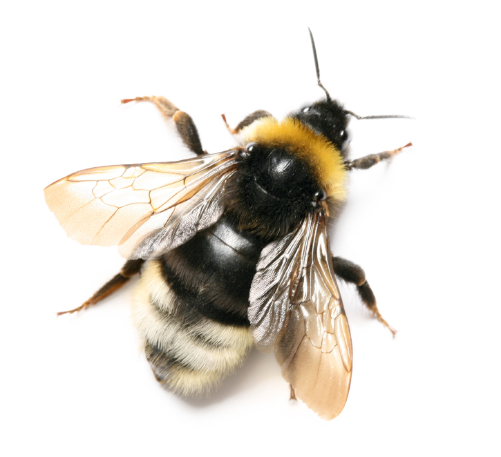 bee png images icons and png backgrounds #18956