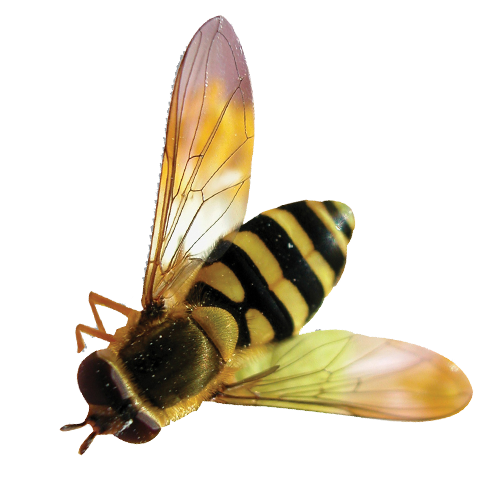 bee transparent background #18973