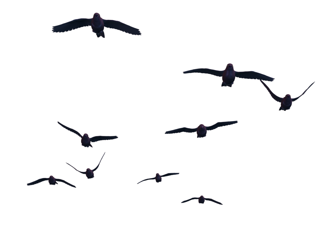 birds png flying bird png #9534