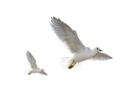 birds png flying bird png transparent flying bird images pluspng #9542