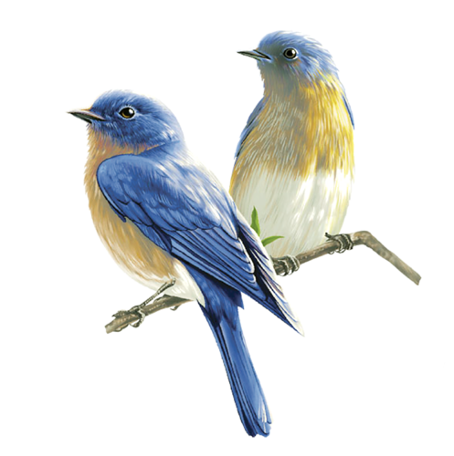 birds png high resolution web icons png #9541