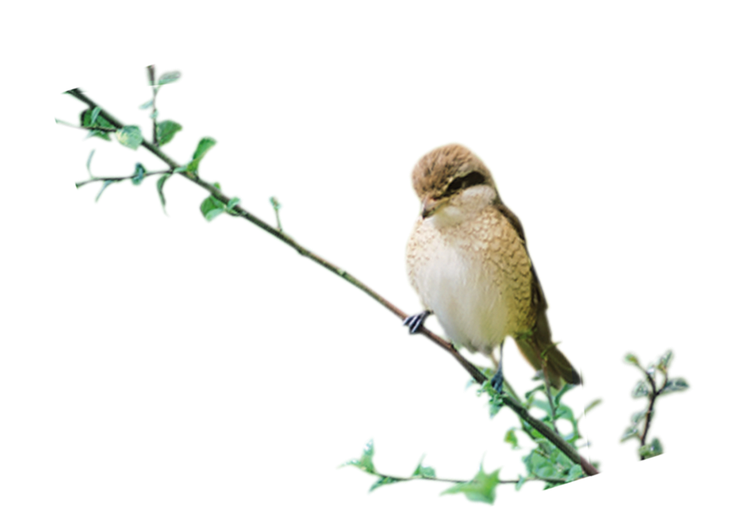 birds png photo transparent #9517