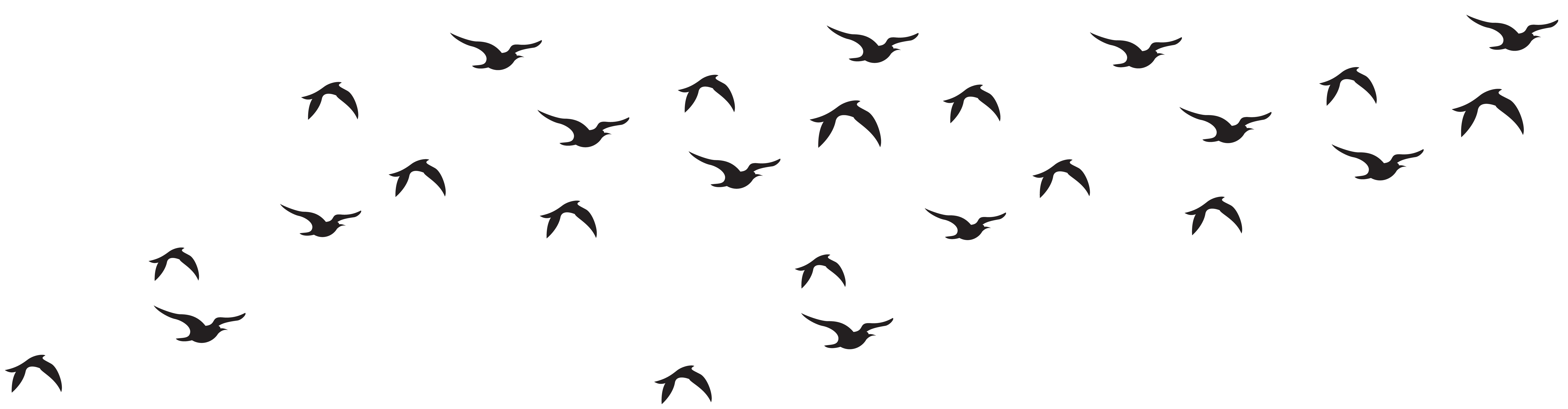 flock birds png transparent flock birds images #9548