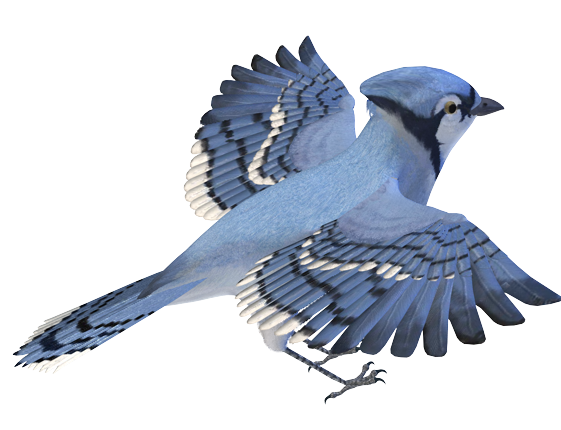 photoscape editor birds png images #9521