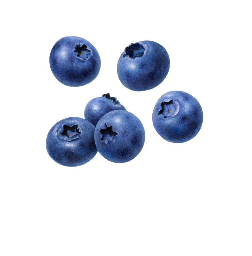 blueberries, blueberry clipart download cognigen cellular #28863