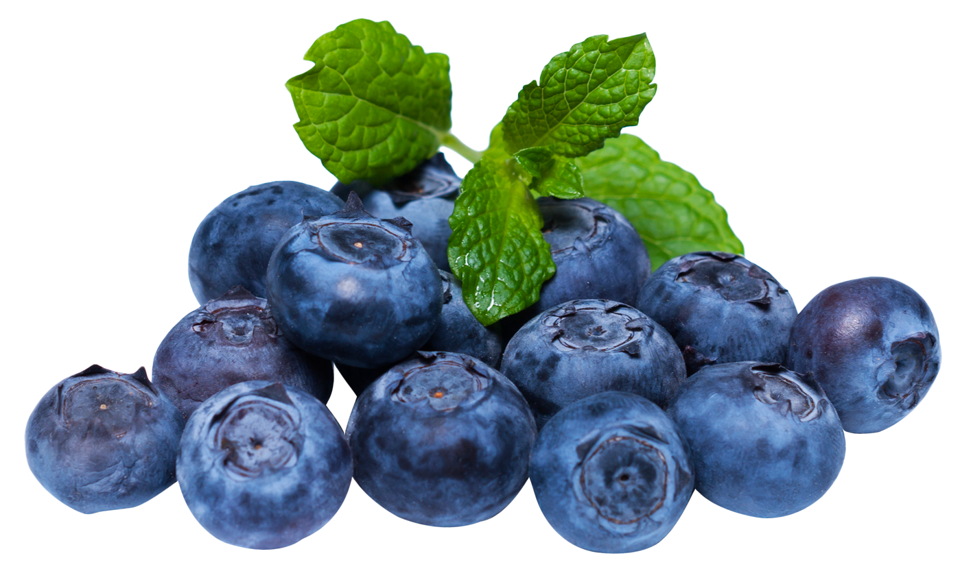 blueberries, blueberry with leaf png image purepng transparent png image library #28864