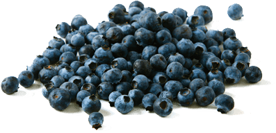 blueberries, health wild blueberry health wbana #28925
