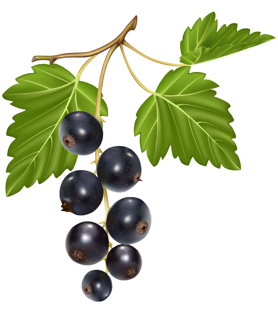 blueberries png clipart best web clipart #28935
