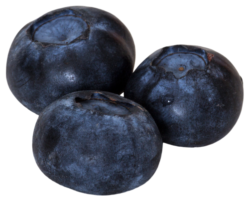 blueberries png image pngpix #28874