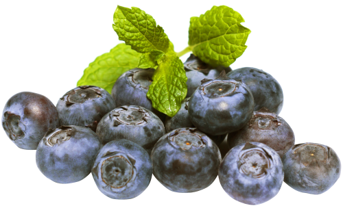 blueberries png image pngpix #28927