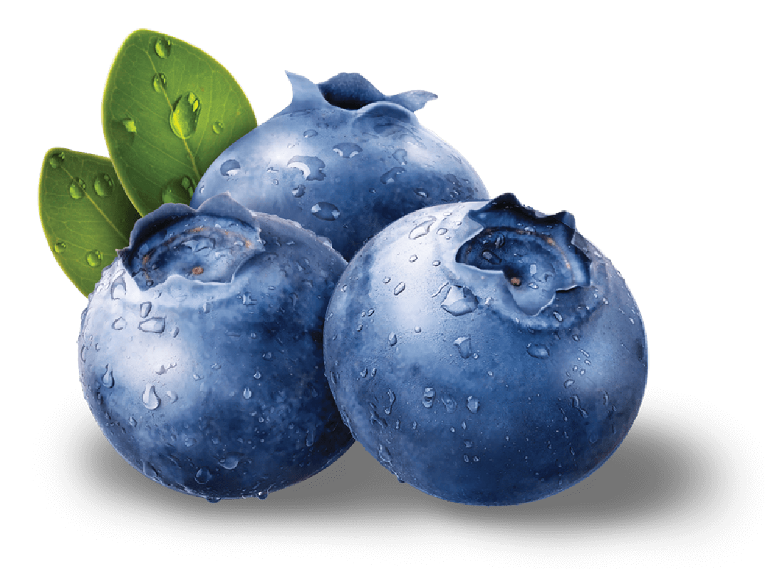 blueberries png image purepng transparent png image library #28928