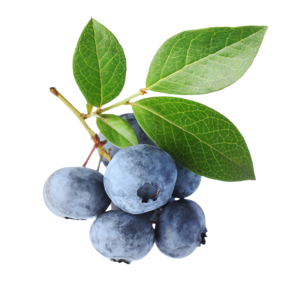 blueberries, rupp bay home page #28934