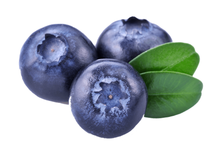 three blueberries transparent png stickpng #28853