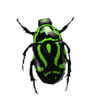 bug pngimg download png photo images clipart #36506