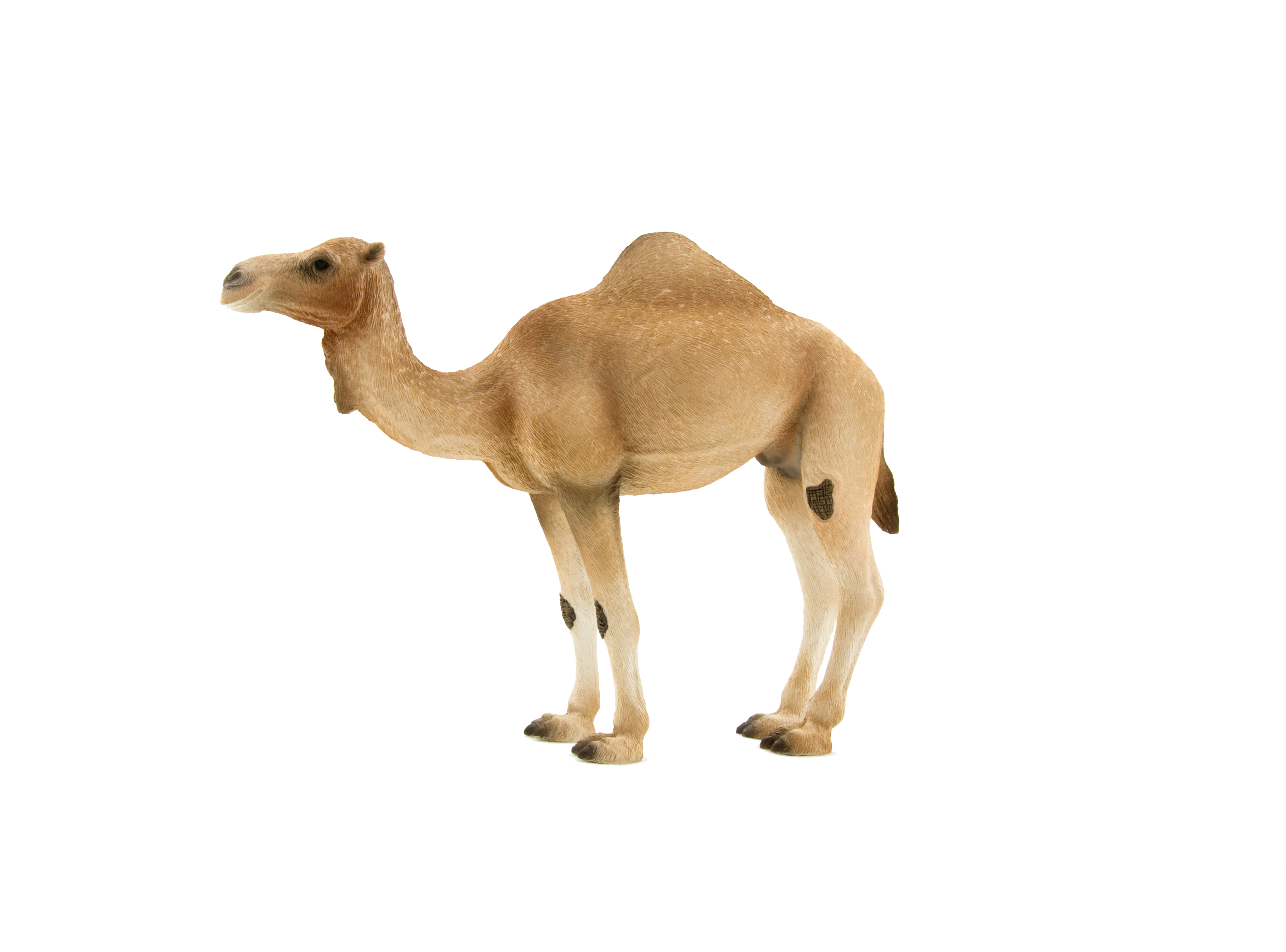 animal planet arabian camel elephanta elephanta #21395