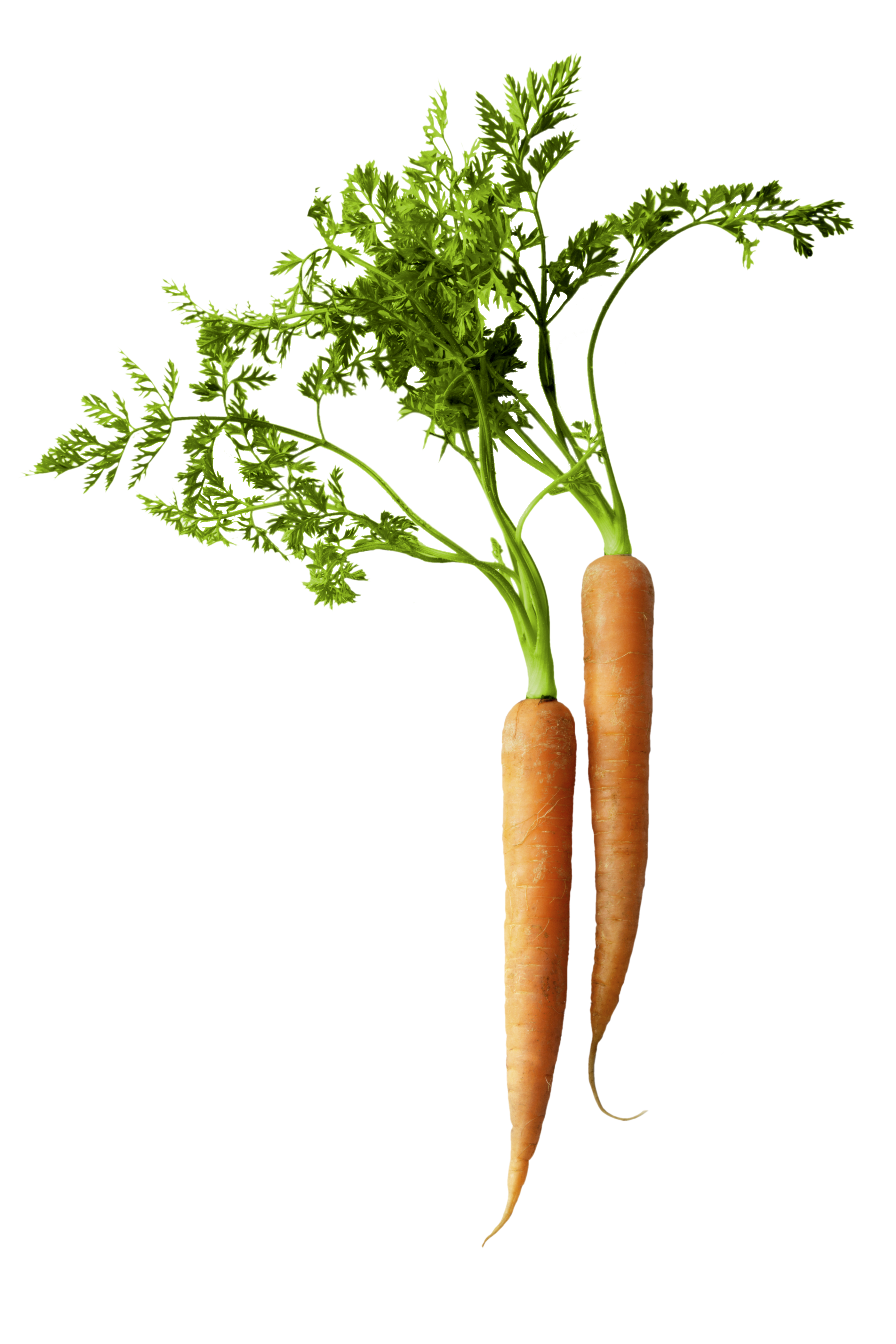 carrot, nutrition #17596