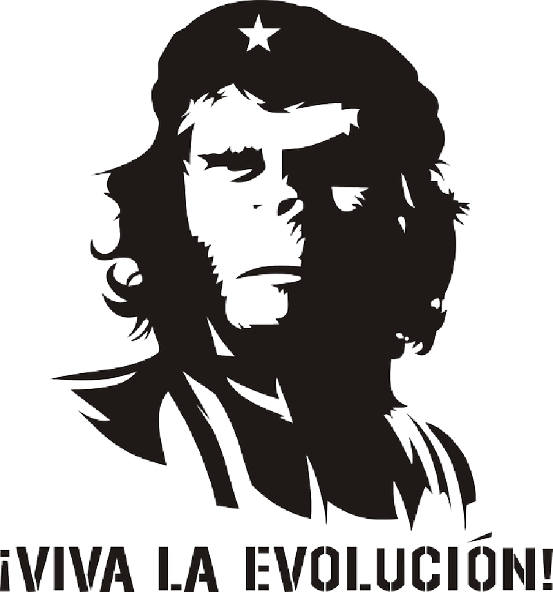 monkey evolution che guevara humor revolution domain pictures pictures #30308