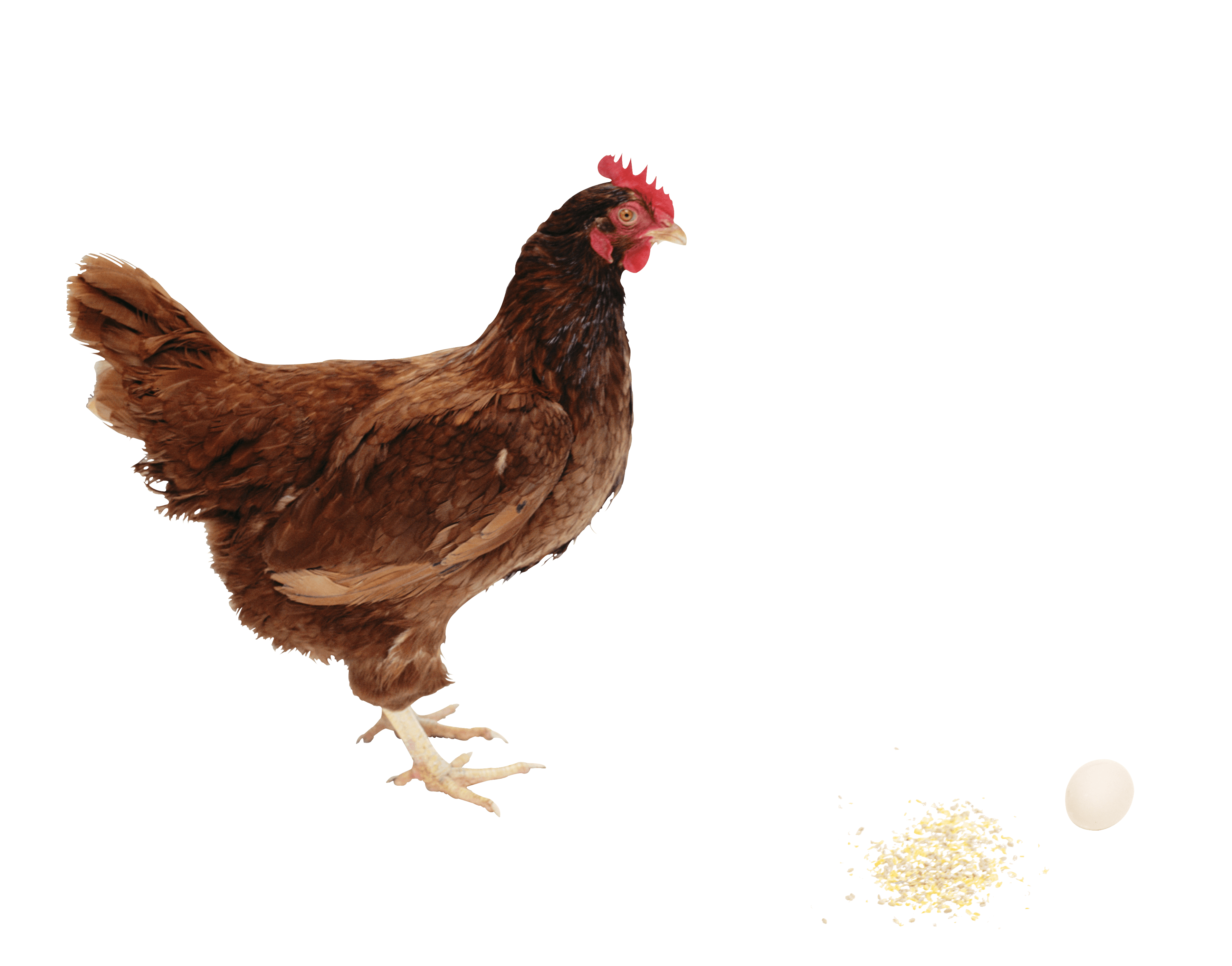 download chicken png image png image pngimg #13845