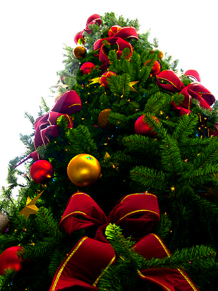 file christmas tree sxc png transparency 11688